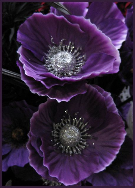 purple poppies 1 90 purple art pinterest purple poppies