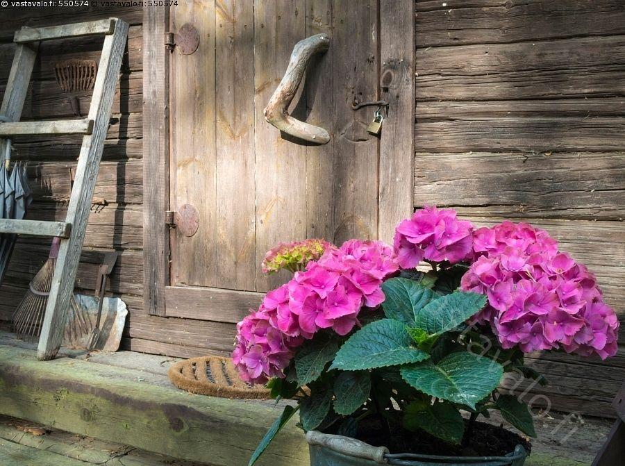 Mökkitunnelmaa - kesä kesämökki mökki aitta vanha hirsiaitta vanhat veistetyt hirret ovi porras tikkaat tikapuut kukat hortensia Hydrangea ämpärissä kesäelämää mökkielämää