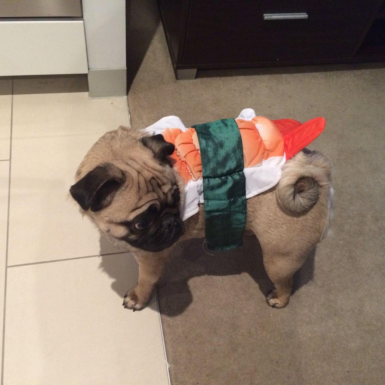 ~ Cheery Pug ~, I iz the sashimi pug!