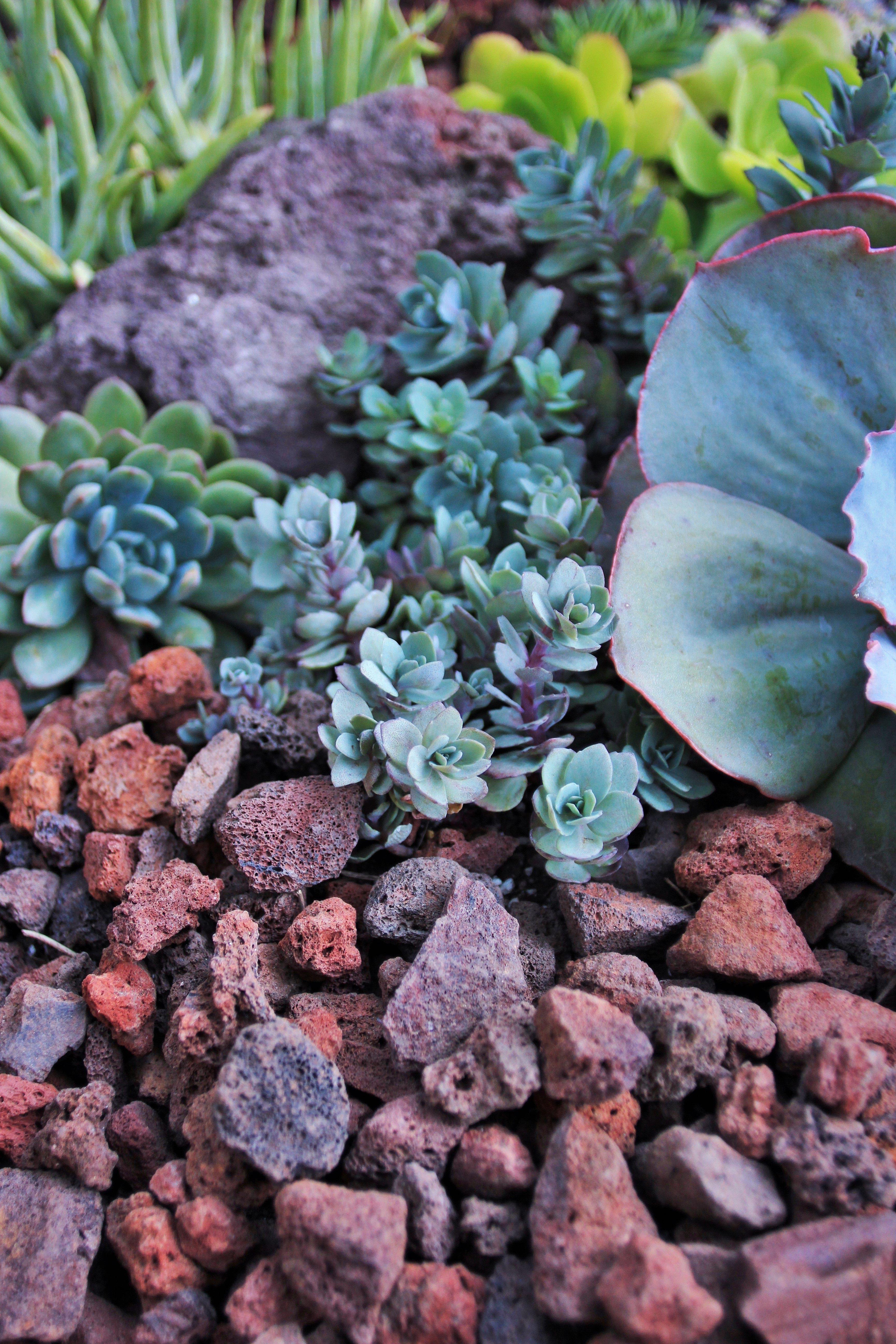 Succulents And Lava Rock Pebble Landscaping Succulents Garden