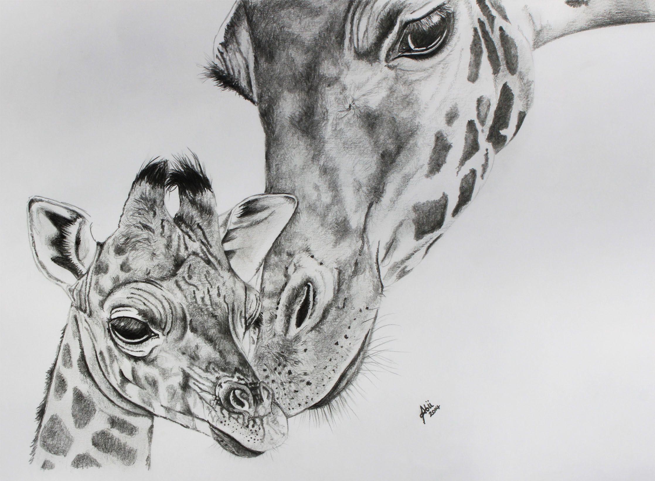 Drawing giraffes giraffe face drawing giraffe pencil drawing