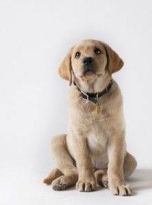 Advice On Raising A Puppy When You Work Full Time Puppies