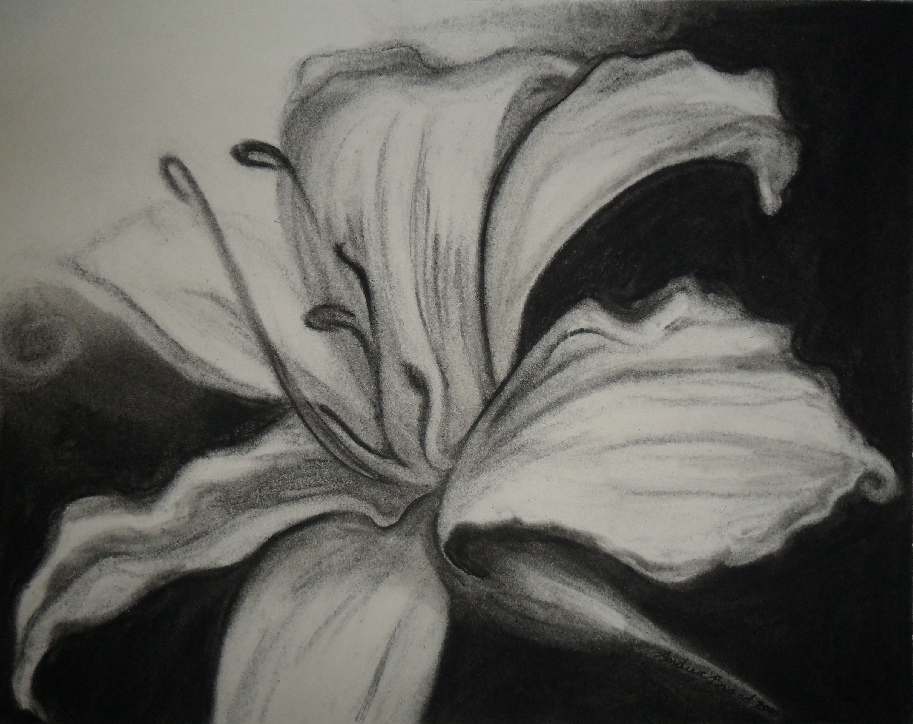 Image Detail For Charcoal On Paper Art Drawing Painting Flowers