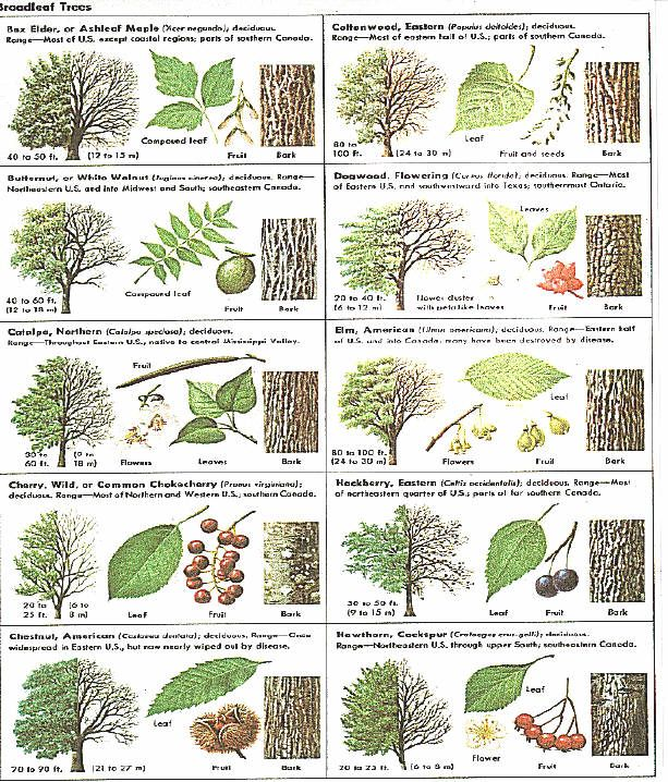 Identify Trees With Pictures I Like That This Includes Several