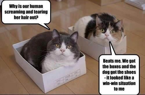 Cat Dog Win Win Meme Funny Animals Cats Cat Memes