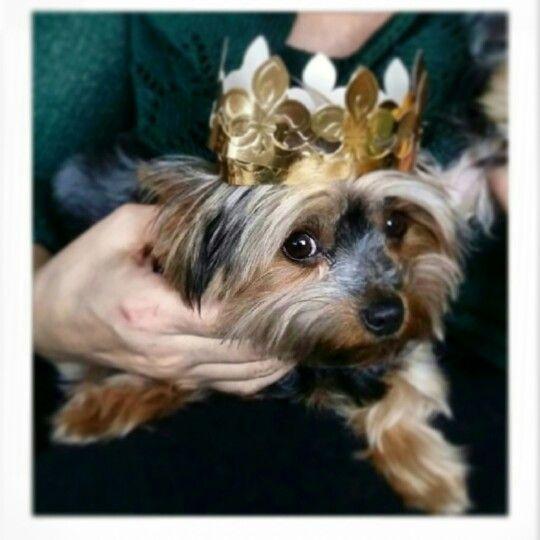 La reina de la casa!!