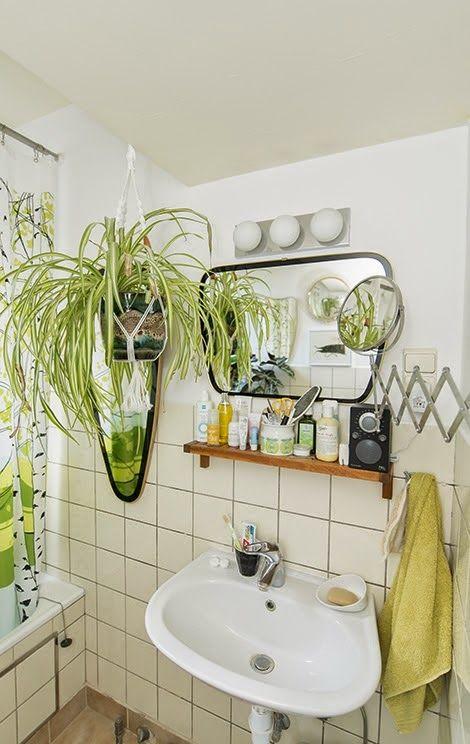 Cute small bathroom love the spider plant bathrooms for Small bathroom plants