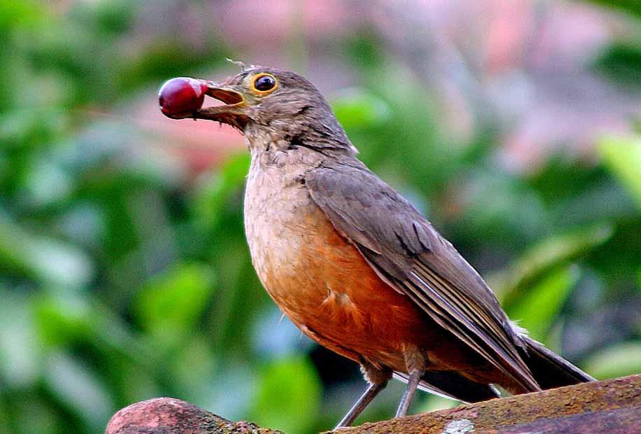 Pajaros Del Rio De La Plata Pajaros Aves De Compania Aves Argentinas
