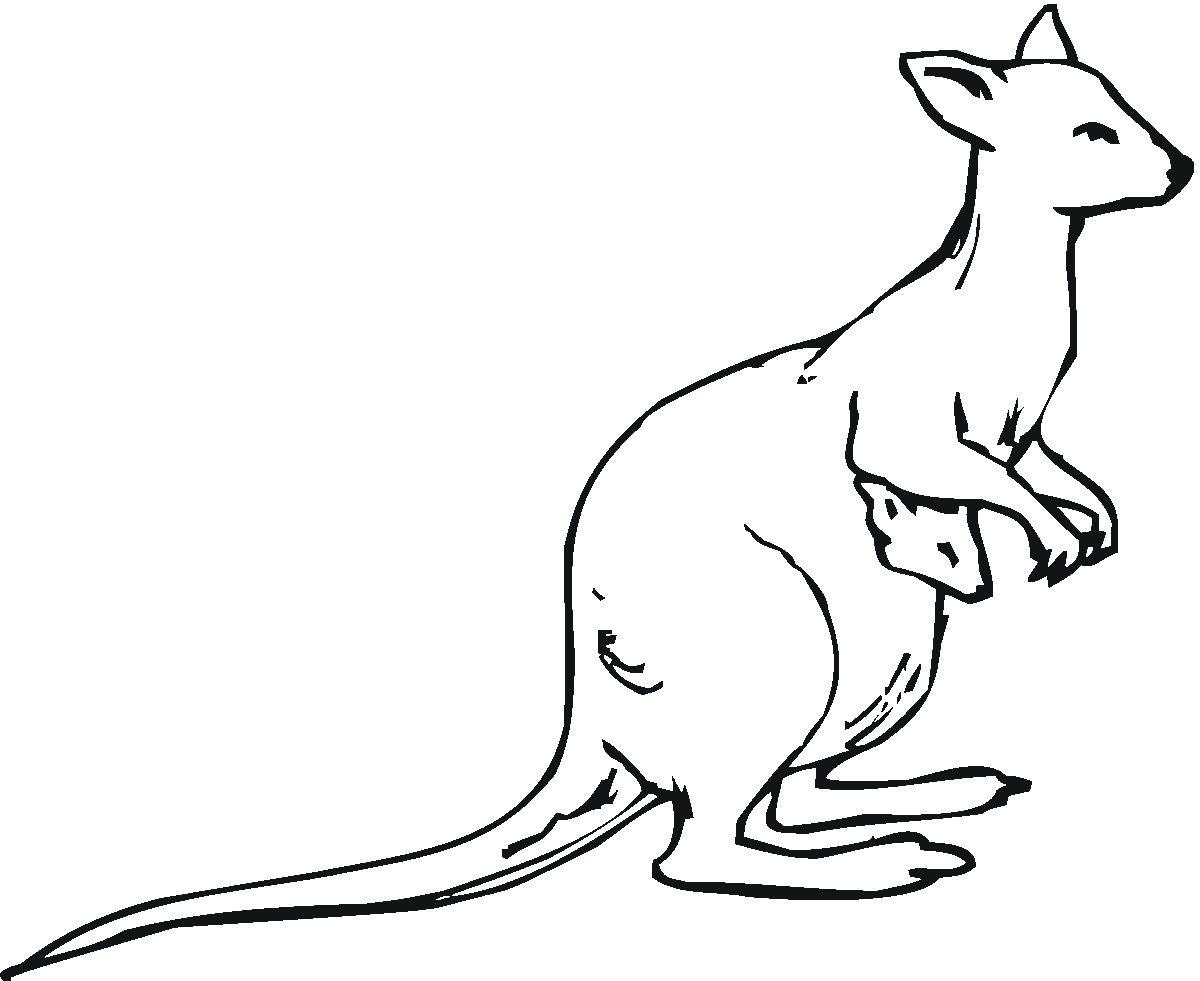 image result for kangaroo line drawing - Kangaroo Coloring Pages