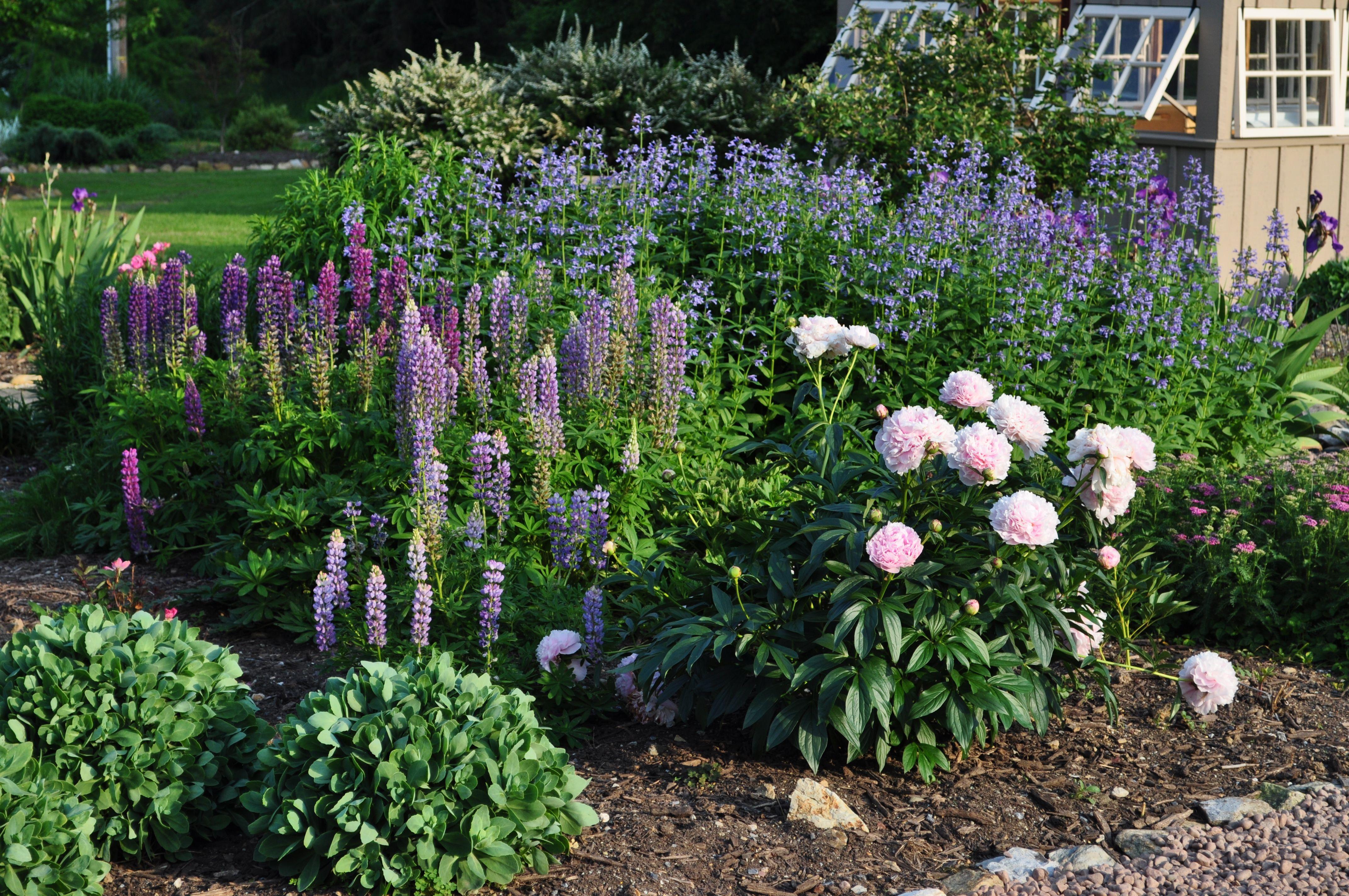 The Victorian Garden Landscaping Around Trees Flower Garden Plants