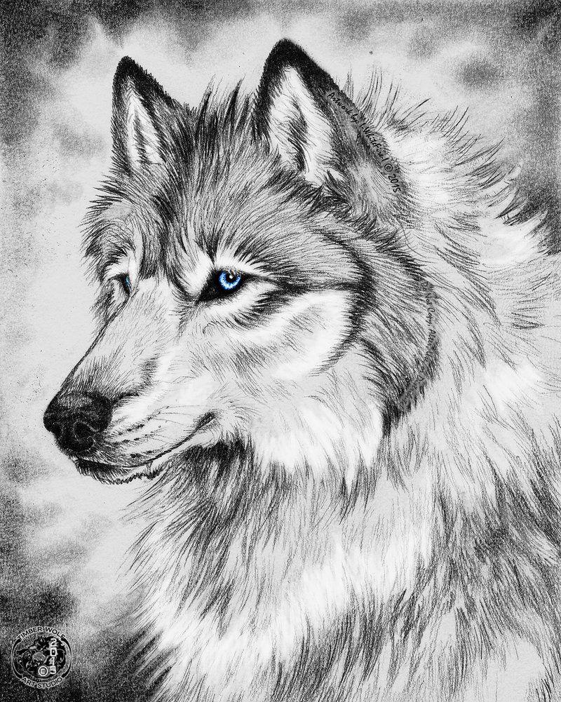 место для картинки волки черно-белые карандаш самых симпатичных