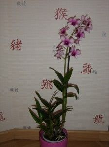 Orchidee Dendrobium Phalaenopsis Comment S En Occuper