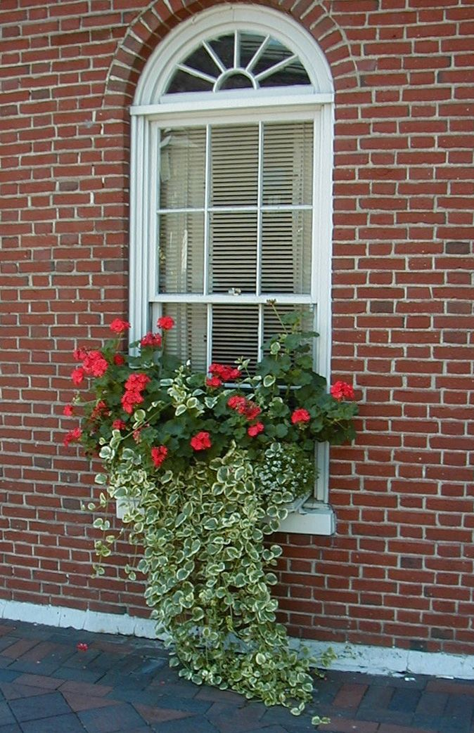 1000 Images About Garden Window Boxes On Pinterest