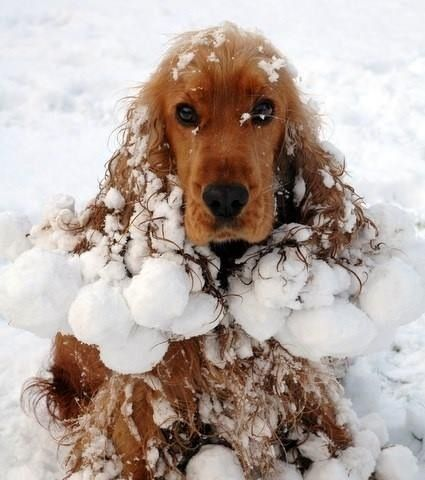 This happens to my dog every winter