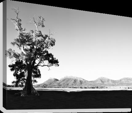 Pin On Australian Treescape Prints Tending
