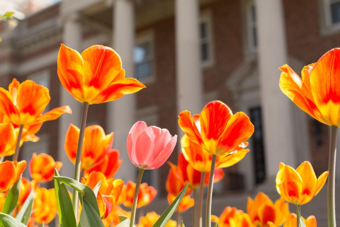 Spring Flowers At Emanuel Hall University Of Dayton College Life