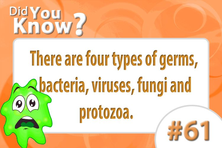 there are four types of germs bacteria viruses fungi