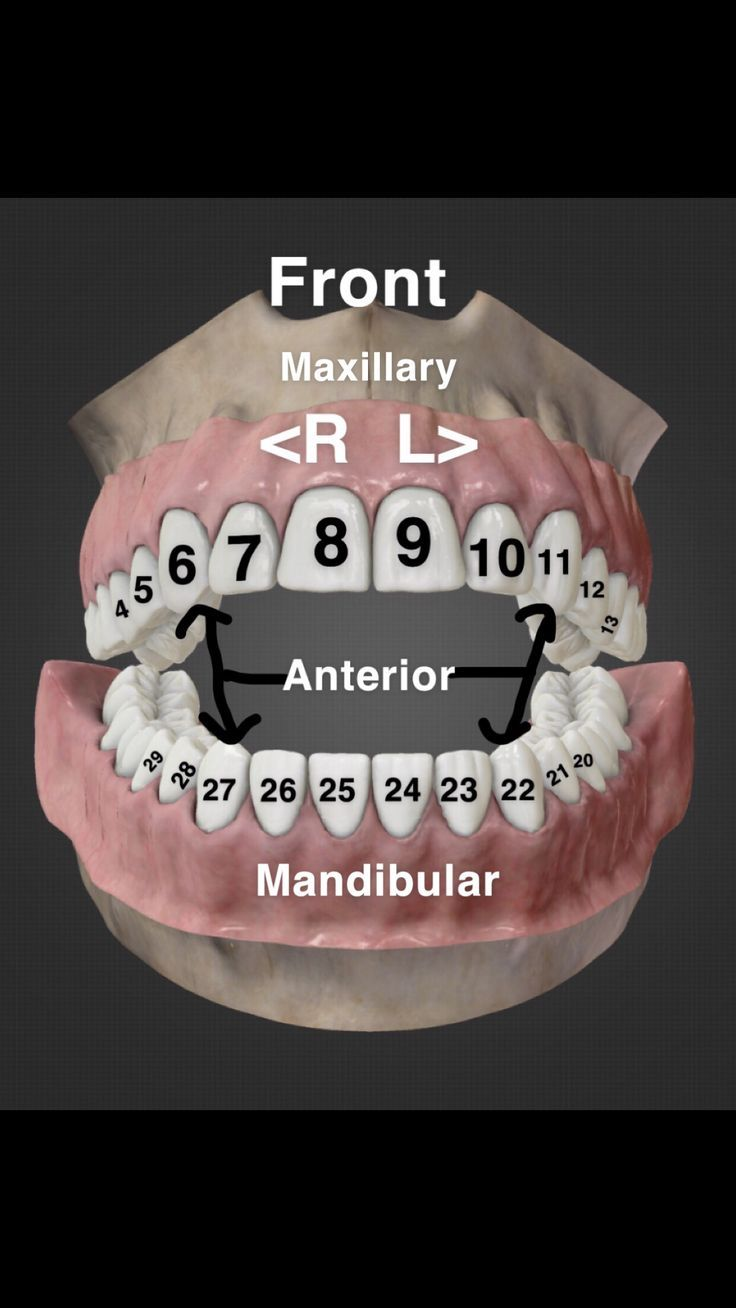 I'm new to the Dental Assisting world so I made this for myself to memorize th... - #Assisting #Dental #Im #memorize #World #dentalassistant