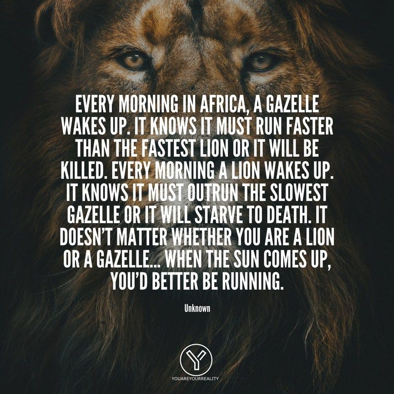 15 Wake Up Early Quotes To Make You JUMP Out Of Bed   You Are Your Reality