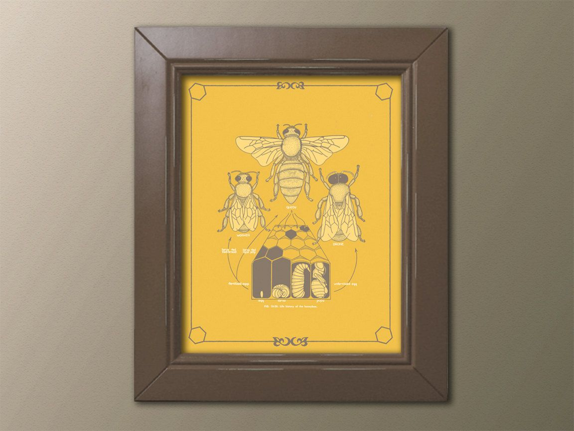 Honey Bee Life Cycle Poster Diagram Taupe on Gold Beekeeper Diagram ...