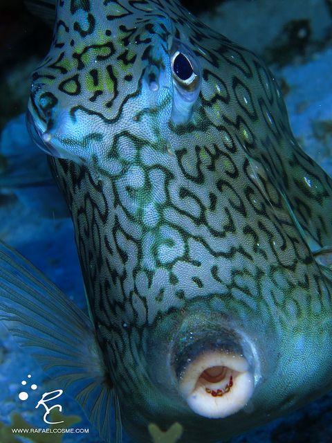 Img 1176 Beautiful Sea Creatures Sea Creatures Water Animals