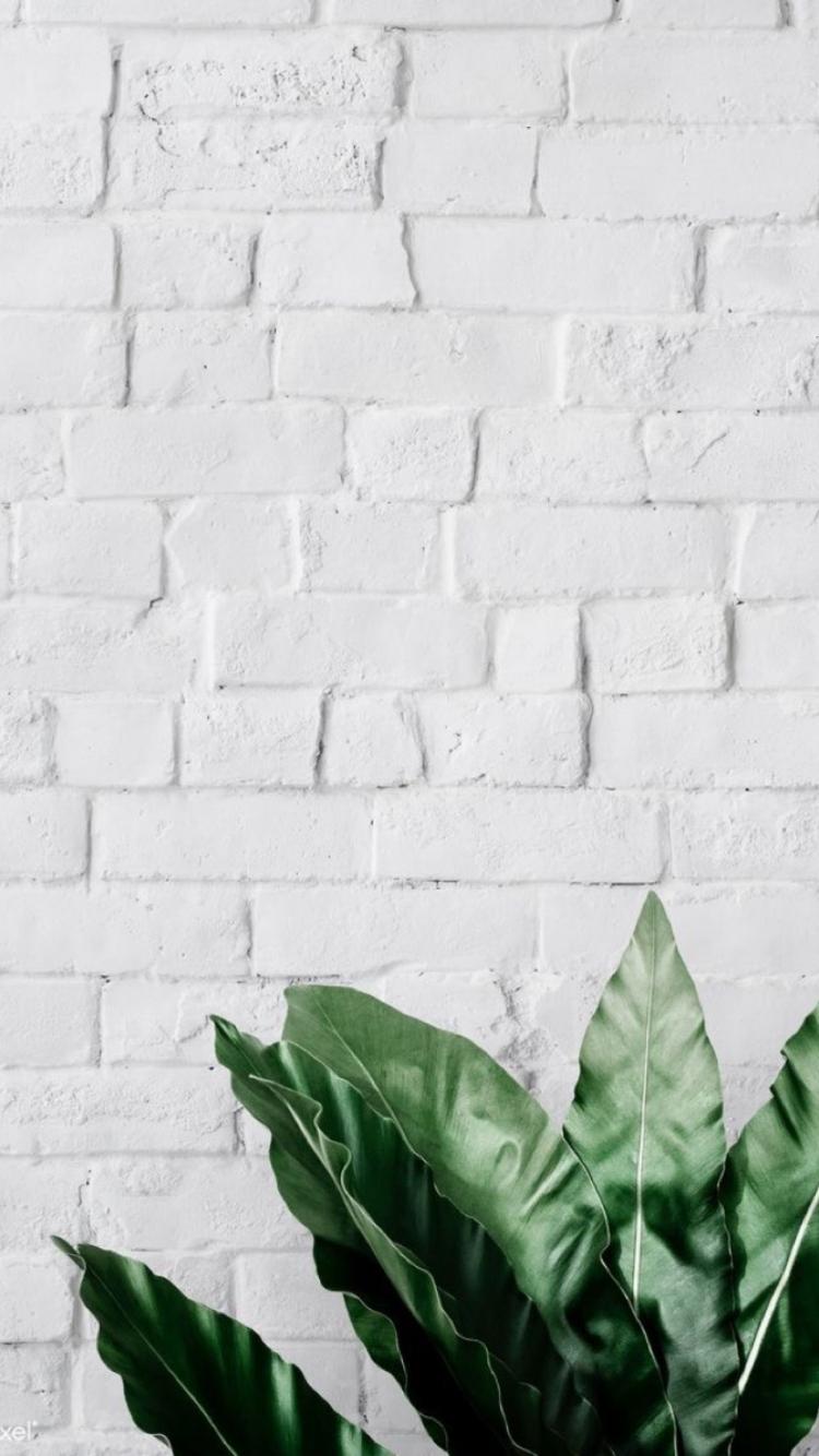 Pin By Estel Lima On Wallpapers Ll Fundo Para Stories Brick Wallpaper Iphone White Brick Wallpaper White Brick Walls