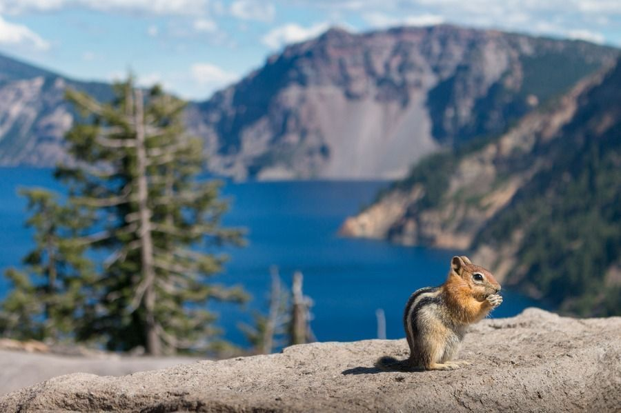6 Tips For Visiting Crater Lake, Oregon + 14 Amazing Photos #craterlakeoregon 6 Tips For Visiting Crater Lake, Oregon + 14 Amazing Photos #craterlakeoregon 6 Tips For Visiting Crater Lake, Oregon + 14 Amazing Photos #craterlakeoregon 6 Tips For Visiting Crater Lake, Oregon + 14 Amazing Photos #craterlakeoregon 6 Tips For Visiting Crater Lake, Oregon + 14 Amazing Photos #craterlakeoregon 6 Tips For Visiting Crater Lake, Oregon + 14 Amazing Photos #craterlakeoregon 6 Tips For Visiting Crater Lake, #craterlakeoregon