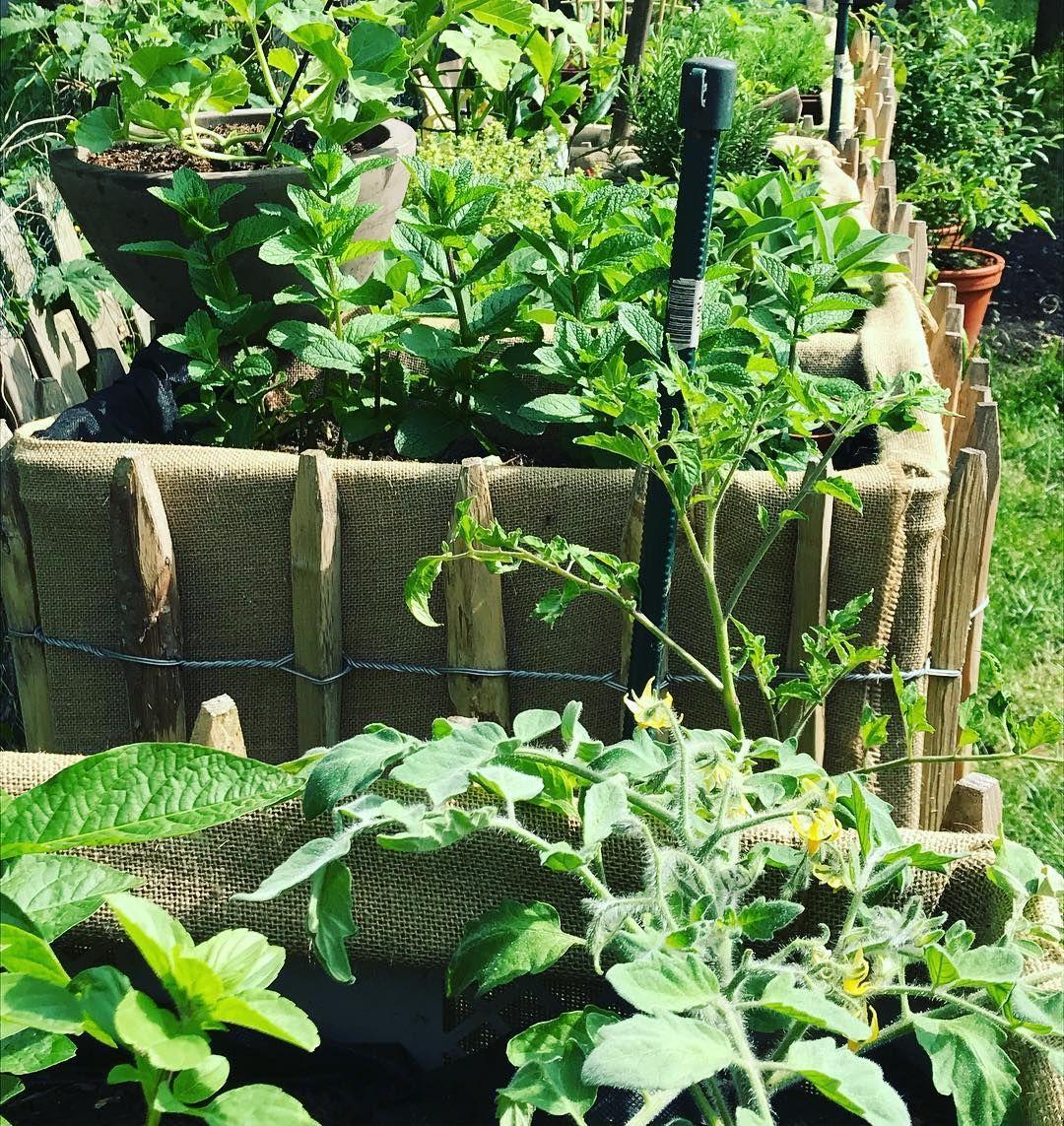 Ich Wurde Sagen Garten L A U F T Hochbeete Von Selbstversorger Farm Garden Urbangardening Garten Selbstversorger Eswachst Gemuse Ve In 2020 Plants Instagram
