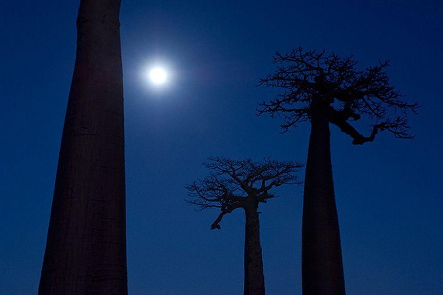 Foto tomada una noche de luna llena, en Madagascar © Marsel van Oosten.