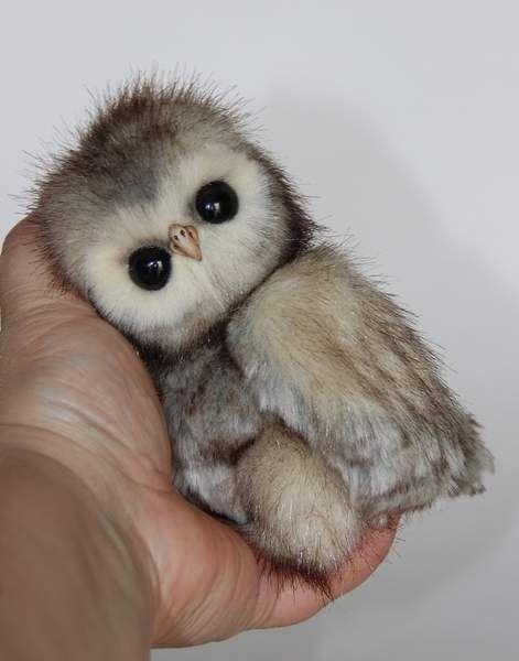 babe owlet By Averina Olesya - Bear Pile