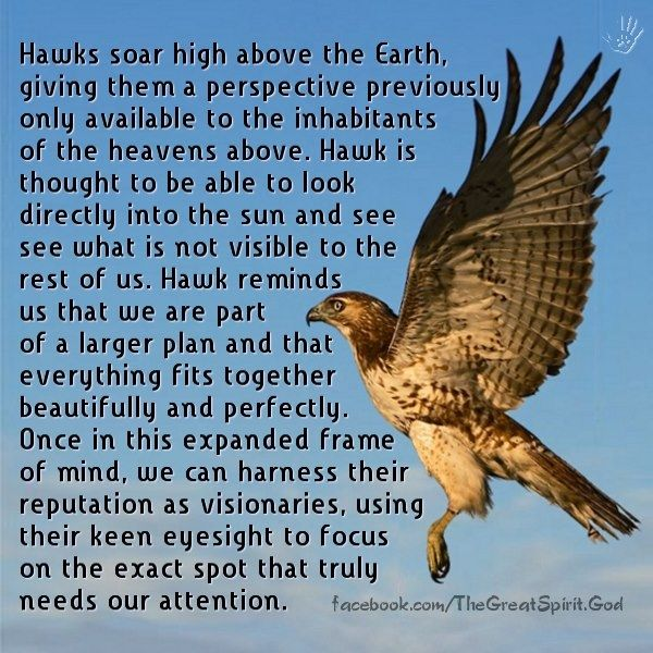 Meaning Of Hawk Sayings Pinterest Spirit Guides Spirit And