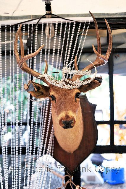 Ok the taxidermy is real here, but I need to remember to put my tiaras on the faux.
