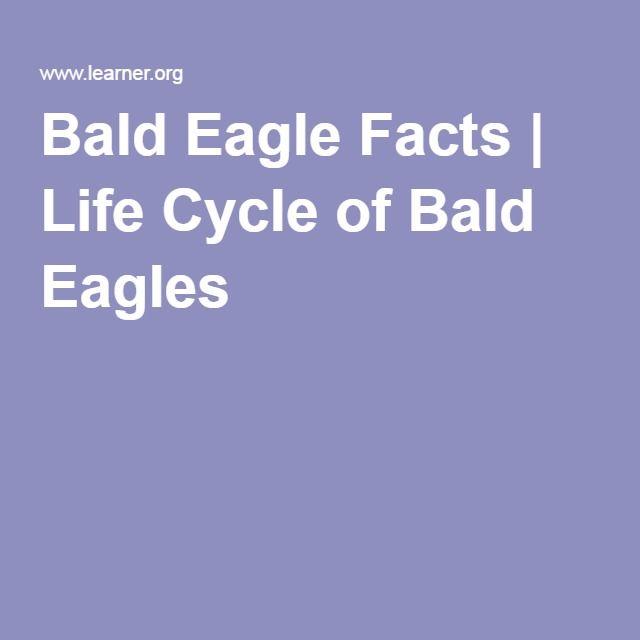 Bald Eagle Facts | Life Cycle of Bald Eagles | Decorah eagles ...