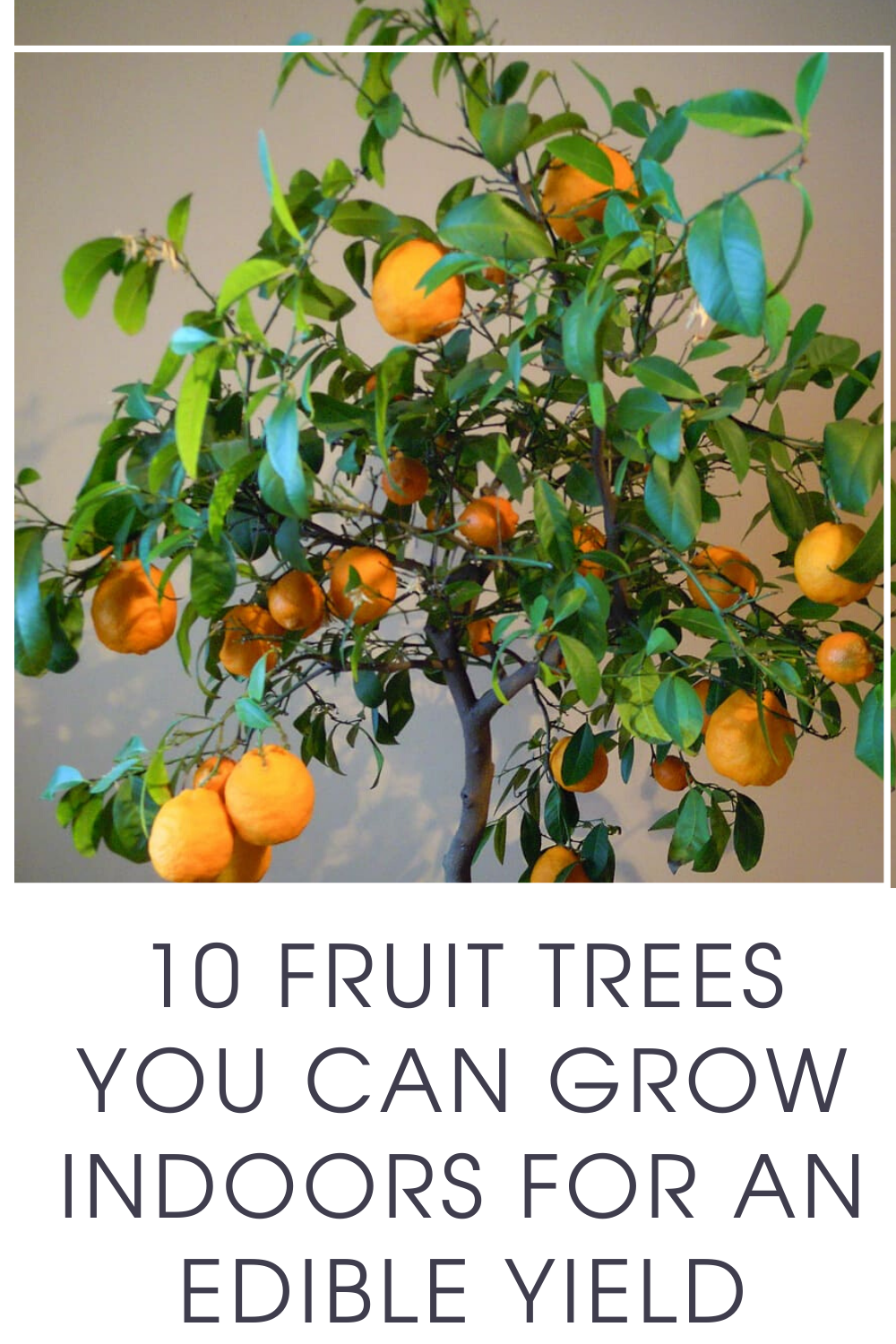 10 Fruit Trees You Can Grow Indoors For An Edible Yield In 400 x 300