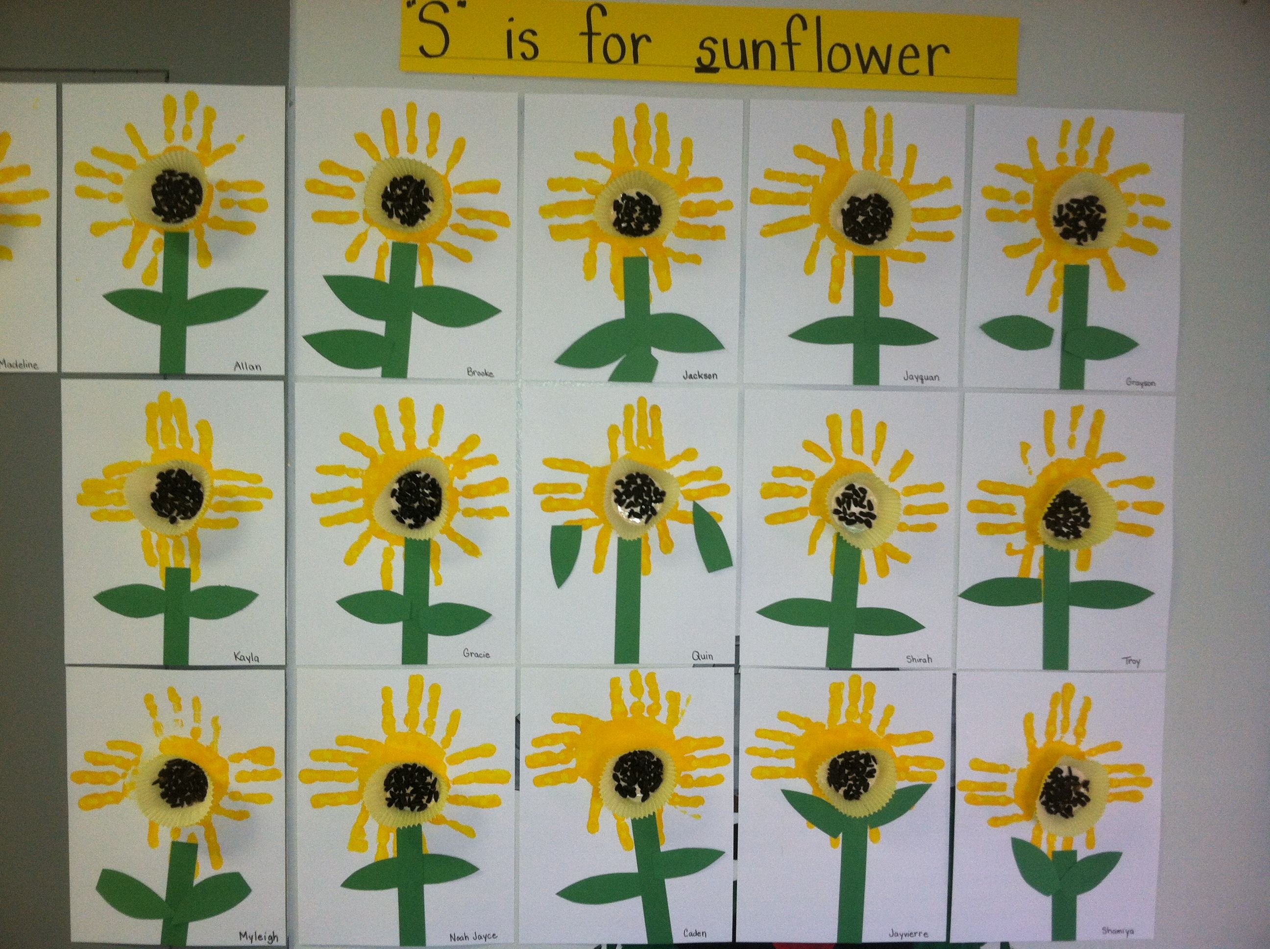 Sunflower Activity For The Letter S Students Paint The Petals With Their Hands And Seeds Are