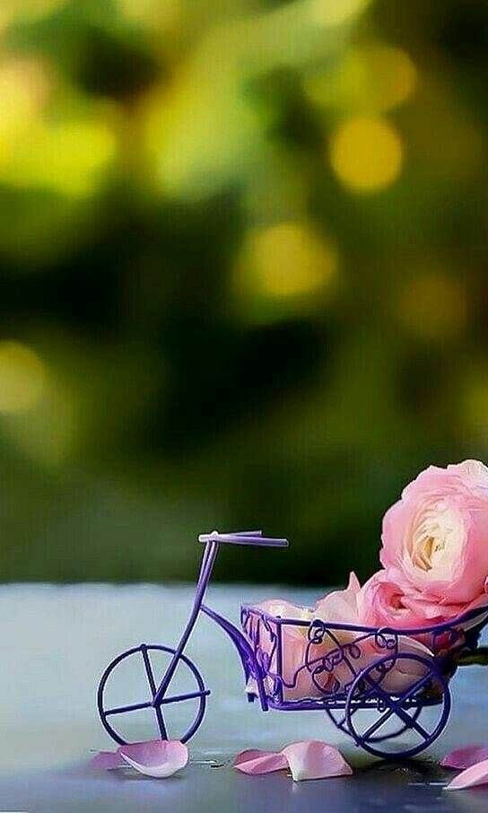 Pin By Sadulahsanatiamuntaha On Beautiful Pictures Miniature Photography Beautiful Wallpapers Cute Wallpapers