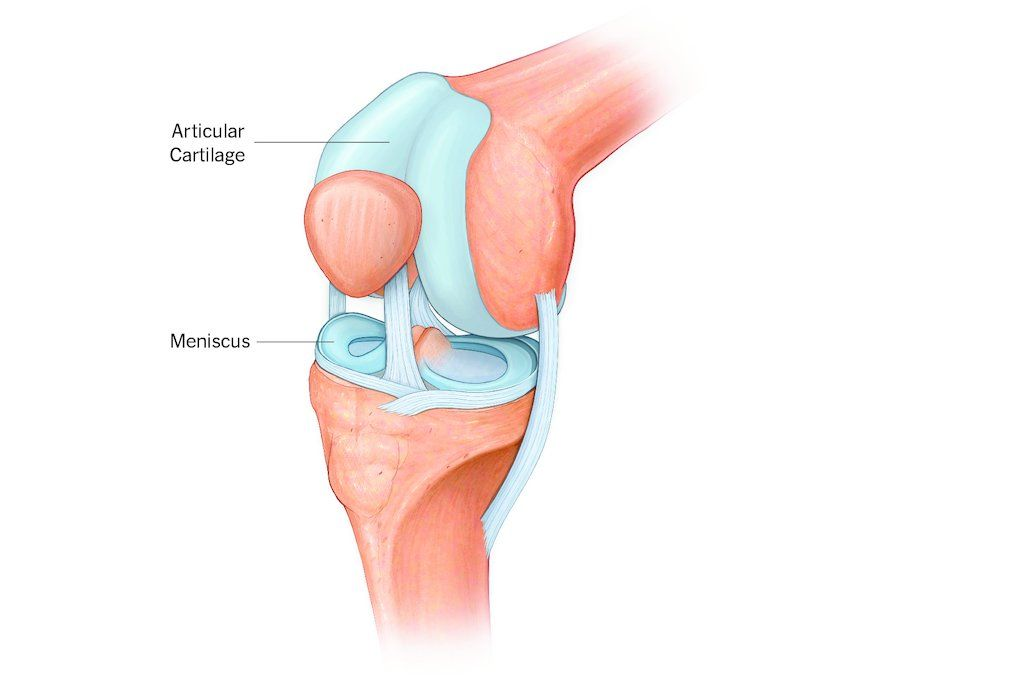 Solved Label The Components Of A Knee Manual Guide
