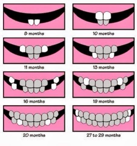 Dentaltown  Easy To Understand Baby Teeth Chart  Pediatric