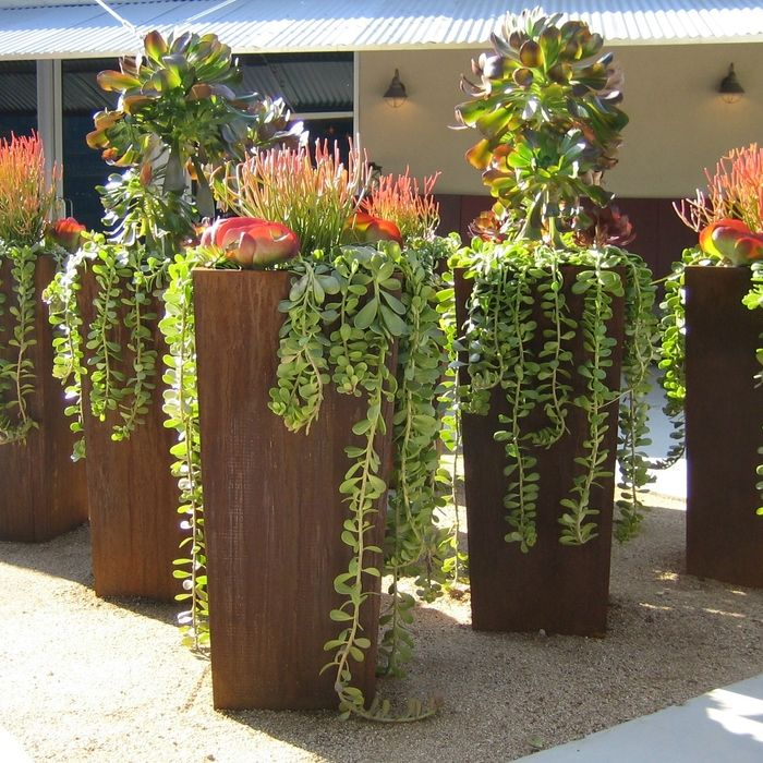 6 Creative Ideas For Gardening In Small Spaces Succulent 640 x 480