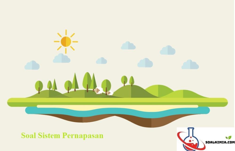 10 Soal Pembahasan Sistem Pernapasan Respirasi Pilihan Ganda Dan Jawabannya Sistem Pernapasan Atau Sistem Respirasi Merupakan Sistem Orga Biologi Inspirasi