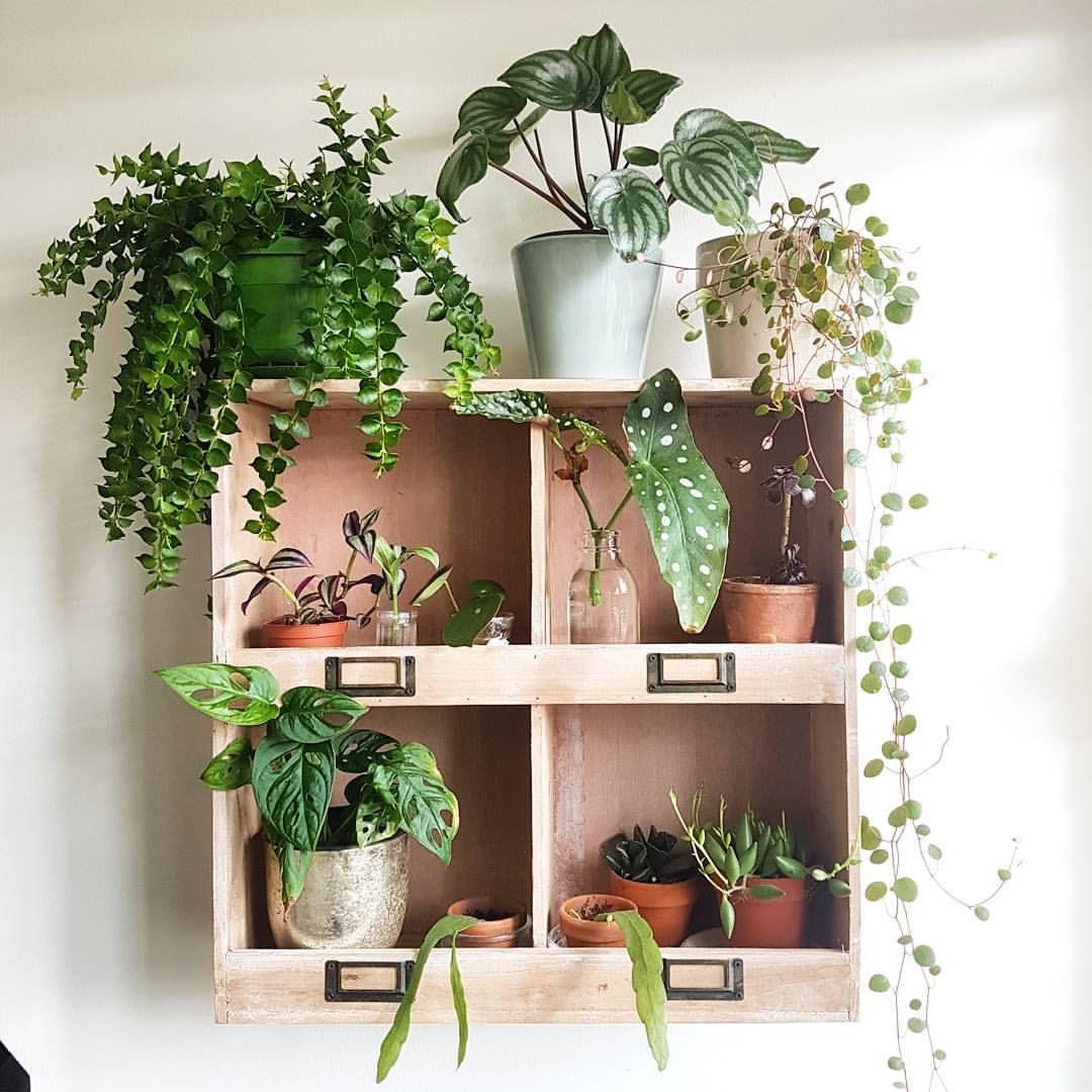 Plants Fleurs Plantes Plants Vegetal Plantes