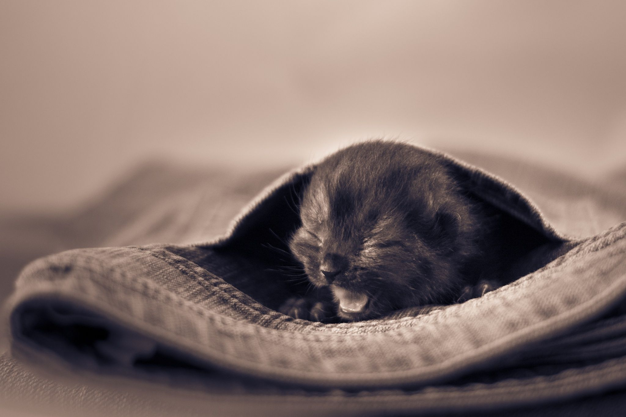 Kitty Jeans by Alex Kaßner on 500px