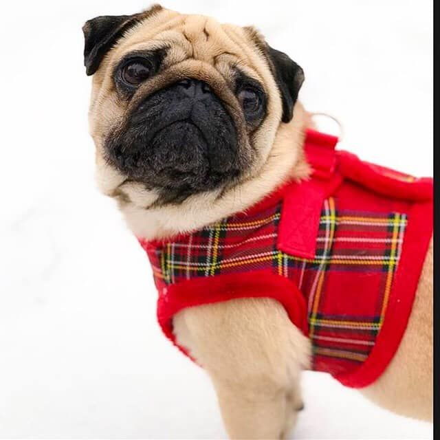 Urban Pup Fleece Lined Step In Harness Jacket Available At Www