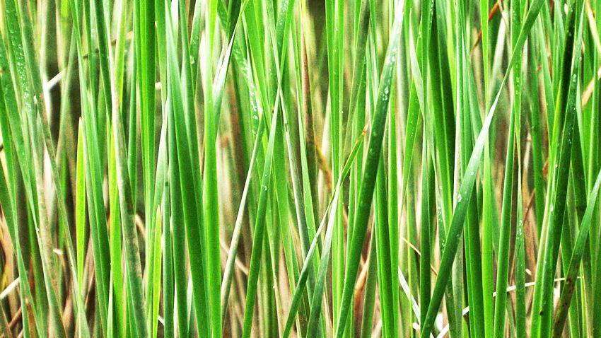 #Herbes K2 67  :     En attente de la pluie... #nature