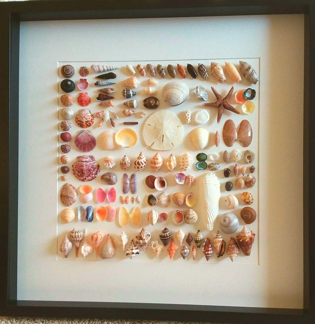 Sea shells framed collection Marco Sanibel island beach decor shadow ...