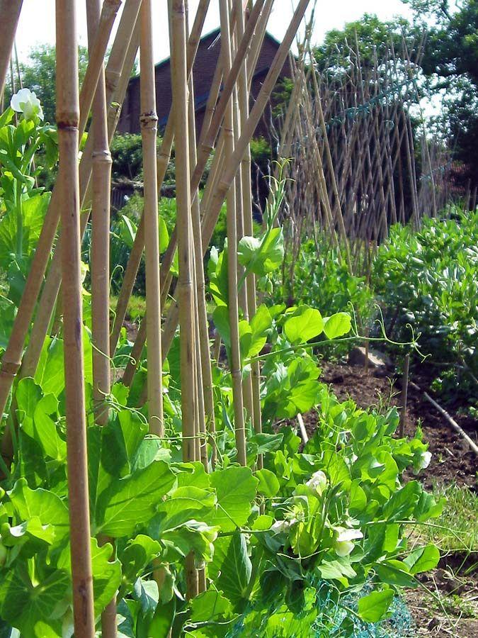 How Farmers Use Bamboo |