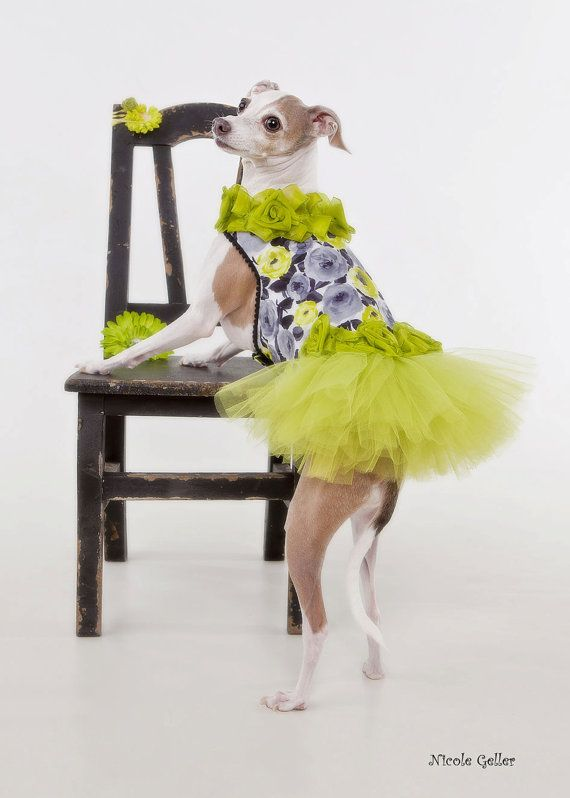 Sophisticated Dog Party Tutu Dress Size M by JustForBella on Etsy, $80.00 | Doggie  Style! | Pinterest | Dog dresses, Dogs and Pets