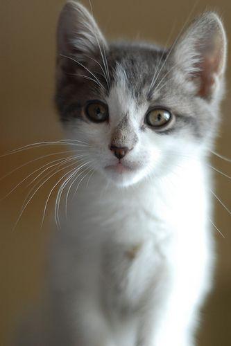 Hi Sweetheart Cats And Kittens Cat Memes Curiosity Killed The Cat