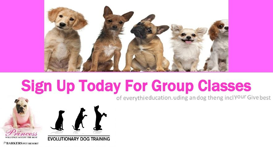 Sign Up Today For Group Classes South Florida Pet Events Etc