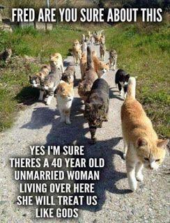 Can You Bury A Cat In Your Backyard - BACKYARD HOME
